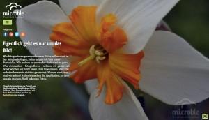 Die Startseite von microble - It's all about the picture!, welche mit WordPress umgesetzt wurde.